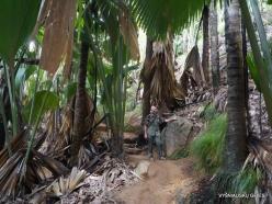 Seychelles. Praslin. Valle de Mai (7)