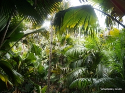 Seychelles. Praslin. Valle de Mai (8)