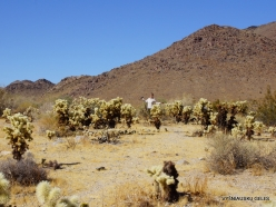Joshua Tree National Park. Colorado desert (5)