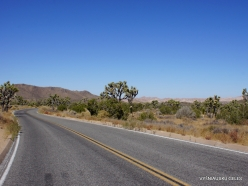 Joshua Tree National Park. Mojave desert (16)
