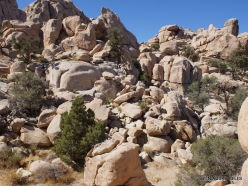 Joshua Tree National Park. Mojave desert (20)