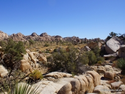 Joshua Tree National Park. Mojave desert (28)