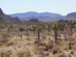 Joshua Tree National Park. Mojave desert (3)