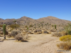 Joshua Tree National Park. Mojave desert (7)