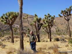 Joshua Tree National Park. Mojave desert. Joshua Tree (Yucca brevifolia) (12)