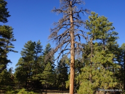 Bryce Canyon National Park (2)