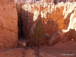 Bryce Canyon National Park (25)