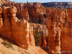 Bryce Canyon National Park (40)