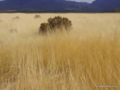 Central Utah steepe (4)