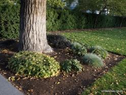 Salt Lake City. Temple Square landscaping (1)