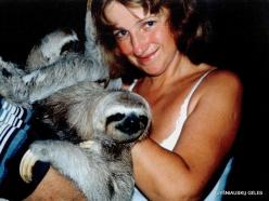 Near Bejuma. Casa Maria. Three-toed Sloth (Bradypus variegatus)