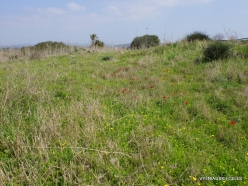 Habonim Beach Nature Reserve. Sharon Plain vegetation (batha) (2)