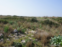 Hof Dor. Sharon Plain vegetation (batha) (3)