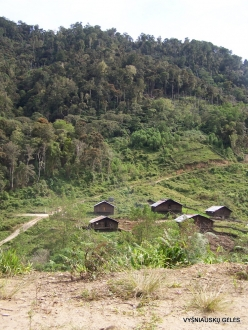 West Papua. Arfak Mountains. Hingk. Papuan village (3)