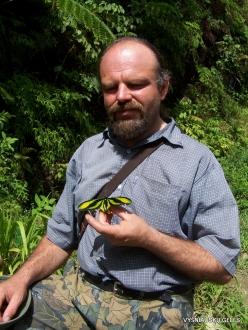 West Papua. Arfak Mountains. Meni. Paradise birdwing (Ornithoptera paradisea arfakensis)