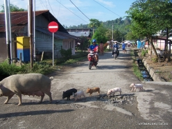 West Papua. Manokwari. Suburb of Papuan peoples (12)