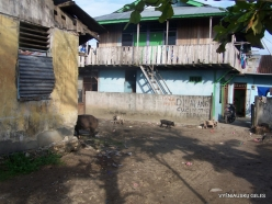 West Papua. Manokwari. Suburb of Papuan peoples (6)