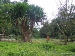 West Papua. Warkapi (2)