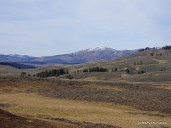 Yellowstone. Hayden Valley (3)
