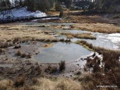 Yellowstone. Mud Volcano Area (4)