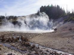 Yellowstone. Mud Volcano Area (8)