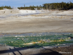 Yellowstone. Norris Geyser Basin (11)