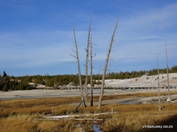 Yellowstone. Norris Geyser Basin (7)