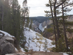 Yellowstone. The Grand Canyon of the Yellowstone. Yellowstone Falls (1)