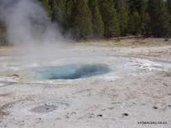 Yellowstone. Upper Geyser Basin (11)