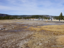 Yellowstone. Upper Geyser Basin (15)