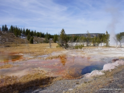 Yellowstone. Upper Geyser Basin (20)