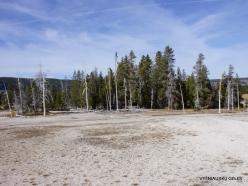 Yellowstone. Upper Geyser Basin (4)