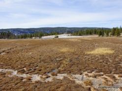 Yellowstone. Upper Geyser Basin (5)