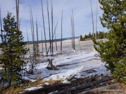 Yellowstone. Upper Geyser Basin (8)