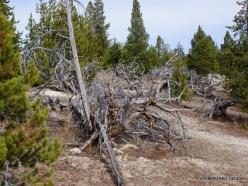 Yellowstone. Upper Geyser Basin (9)
