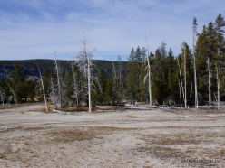 Yellowstone. Upper Geyser Basin. Crested Pool (1)