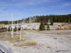Yellowstone. Upper Geyser Basin. Firehole River (2)