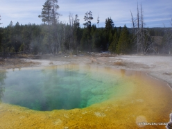 Yellowstone. Upper Geyser Basin. Morning Glory Pool (3)