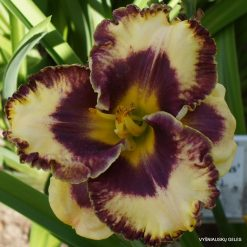 Daylily 'Grand Masque' (3)