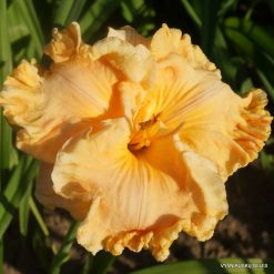 Daylily 'How Beautiful Heaven Must Be'