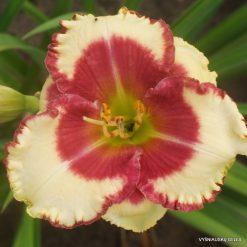 Hemerocallis 'Abilene Lillian'